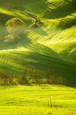 Countryside, San Quirico d'Orcia