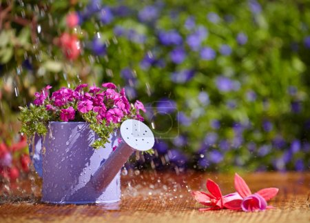 Gardening, watering the plants