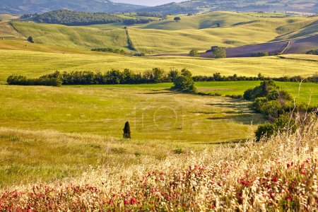 Countryside, Tuscany