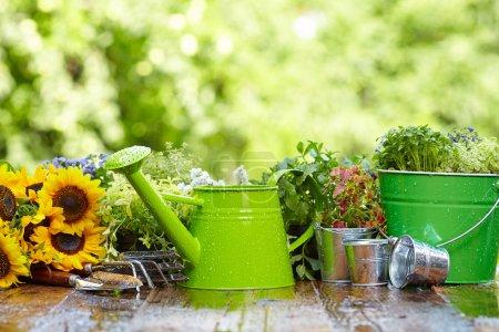 Photo pour Outils et fleurs de jardinage en plein air - image libre de droit