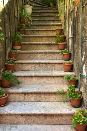 Photo for Stone staircase with plants in a medieval city with cobblestone pathways - Royalty Free Image