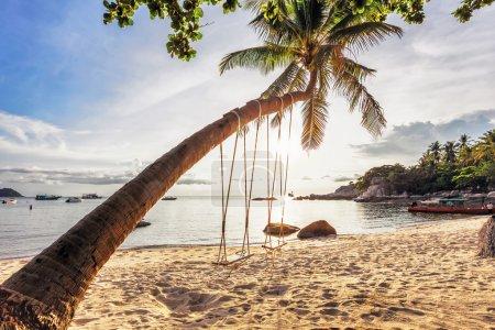 Foto de Columpios y palmeras en la playa tropical de arena. Mira Fisheye - Imagen libre de derechos