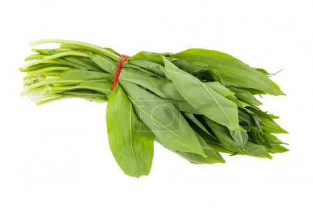 Photo for Bunch of ramsons leaves on a white background - Royalty Free Image