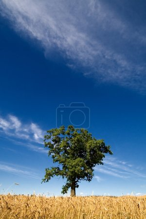 Green tree on a background of the dark blue sky, clouds and yell