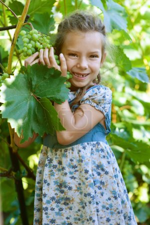 kleines Mädchen mit Zöpfen, das Weintrauben hält