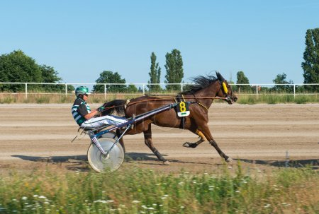 Harness Racing, Berlin