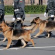 Russian police with dogs walking on the street...