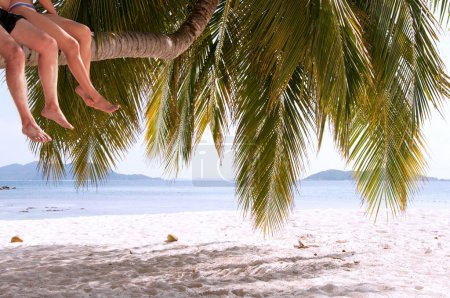 Photo for Legs of couple sitting on palm tree on a paradise island - Royalty Free Image