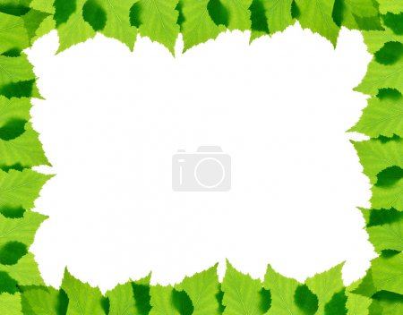 Photo for Green birch leaves frame isolated - Royalty Free Image