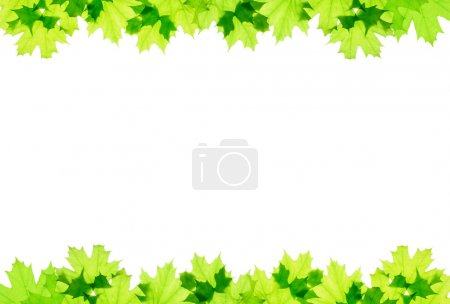 Photo for Frame of green maple leaves isolated - Royalty Free Image