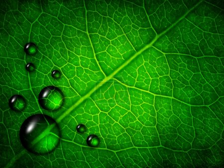 Photo for Spring green leaf background with dew drops - Royalty Free Image