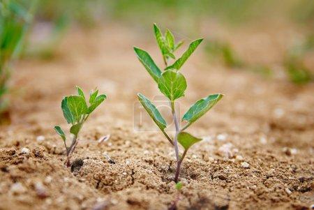 Photo pour Petite plante verte poussant dans le désert . - image libre de droit