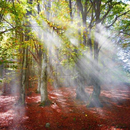 Photo pour Brume dans la forêt d'automne. arbres aux feuilles vertes et jaunes - image libre de droit