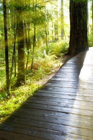 Photo pour Chemin en bois à travers la forêt verte au lever du soleil avec brouillard et lumière chaude - image libre de droit