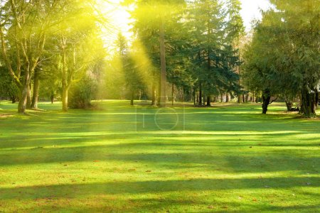 Photo for Green lawn with trees in park under sunny light - Royalty Free Image