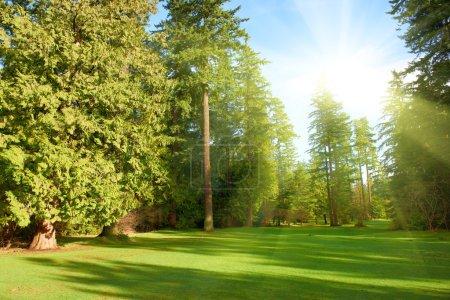 Photo pour Pelouse verte avec des arbres dans le parc sous la lumière du soleil - image libre de droit