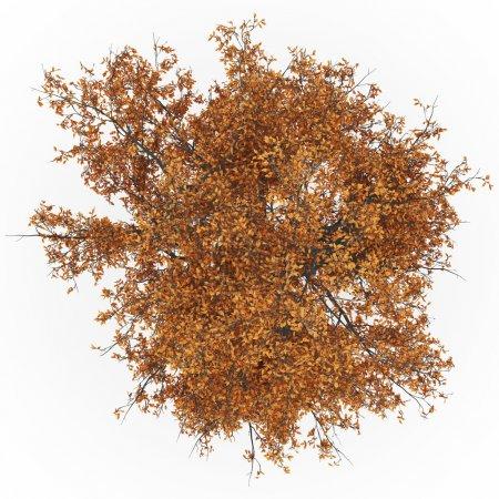 Ash tree top autumn