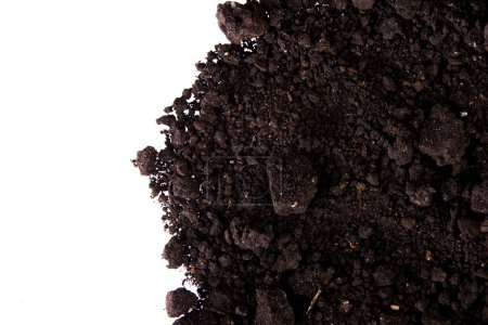 Photo for Dirt isolated on white background - Royalty Free Image