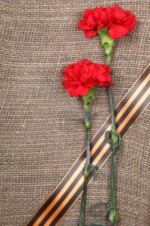 Photo pour Ruban Saint-Georges et oeillets rouges sur un tissu brun - image libre de droit
