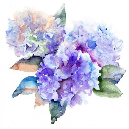 Foto de Flores azul hermoso hydrangea, Ilustración acuarela - Imagen libre de derechos