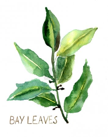 Photo for Bay leaves, watercolor illustration - Royalty Free Image