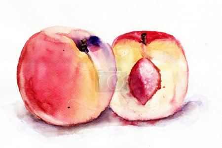 Photo for Watercolor illustration of Peaches - Royalty Free Image