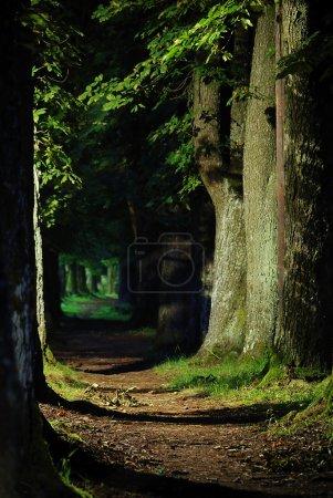 Foto de Con tres en ambos lados alrededor de manera que camina - Imagen libre de derechos