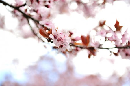 Photo for Flower blossom in spring - Royalty Free Image