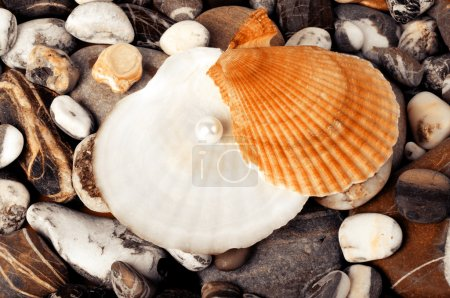 Beautiful shell with pearl