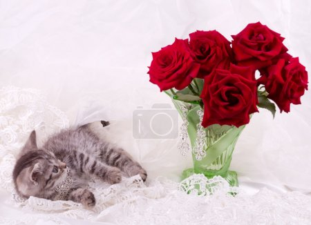 Fluffy colored kitten with red roses