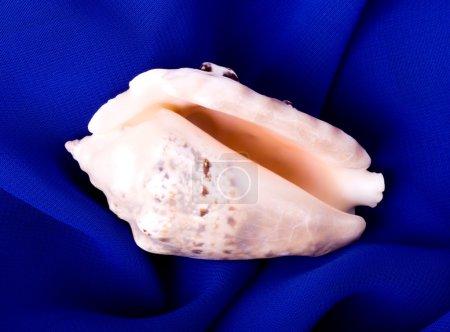 Beautiful exotic shell on blue background