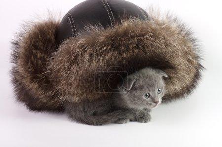 Cat and fur hat