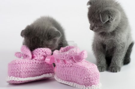 Kittens with   baby booties