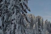 Alberi ricoperti di neve e brina