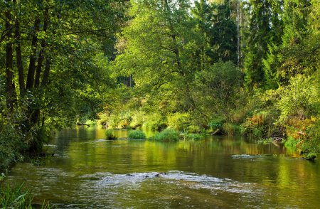 Photo for River in forest in springtime - Royalty Free Image