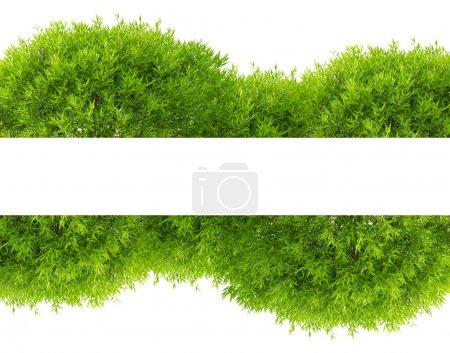 Photo pour Bande de feuillage vert arbre isolé sur fond blanc - image libre de droit