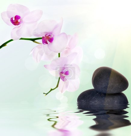 pink orchids and black stones on light background