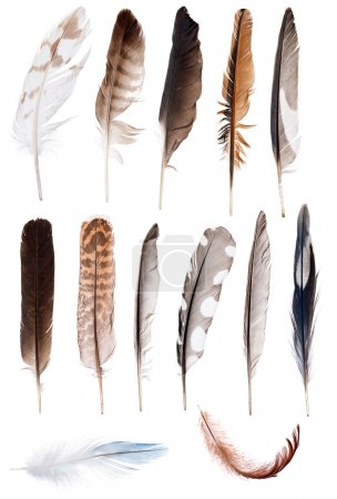 thirteen feathers isolate on white