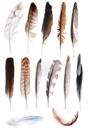 Photo pour Treize plumes isolées sur fond blanc - image libre de droit