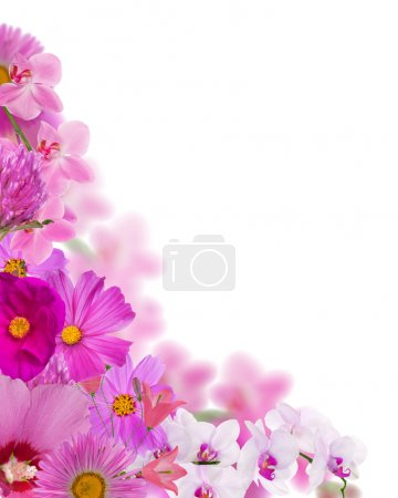 Photo for Bright pink flowers corner isolated on white background - Royalty Free Image
