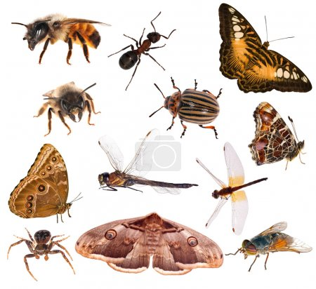 Photo pour Ensemble d'insectes de couleur brune isolés sur fond blanc - image libre de droit