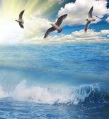 Gulls flying above sunny blue sea