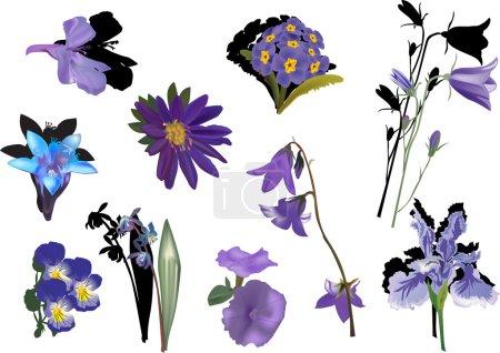 Illustration pour Illustration avec la collection de fleurs de couleur lilas isolé sur fond blanc - image libre de droit