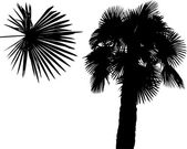tree palm silhouette isolated on white