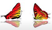 Dvě červené a žluté motýli