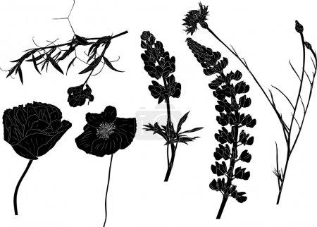 six wildflowers on white
