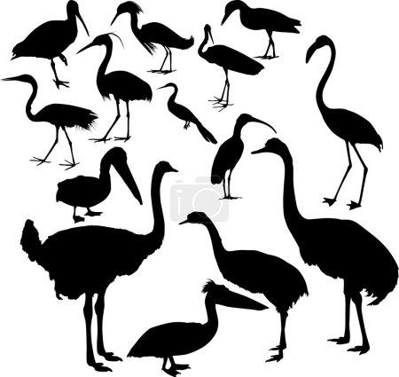 Fourteen different bird silhouettes collection