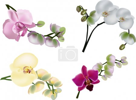 Illustration for Illustration with collection of orchids isolated on white background - Royalty Free Image