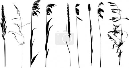 Illustration for Illustration with nine wild plants silhouette isolated on white background - Royalty Free Image