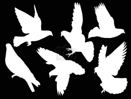 six isolated white pigeons